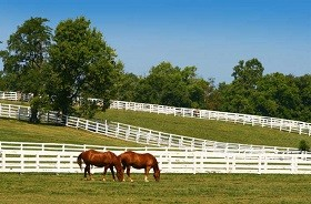 Ocala horse properties for sale