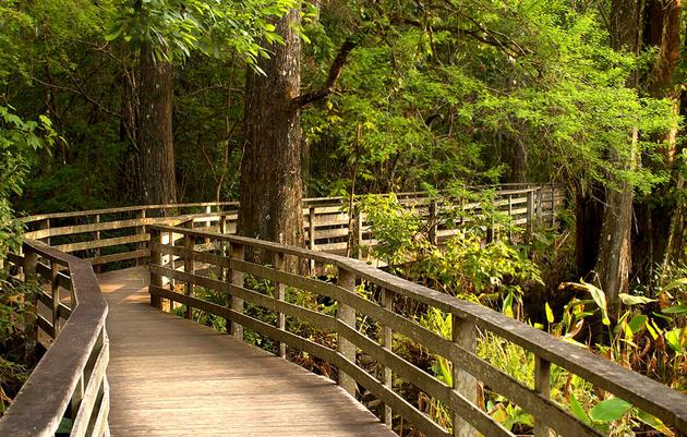 Corkscrew Swamp Naples Corkscrew Swamp Sanctuary is a National Audubon Society sanctuary in Collier County