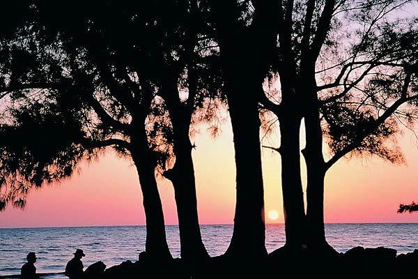 Sun Setting Through the Pine Trees Just South of the Sandbar Restaurant