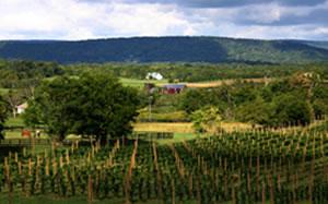 loudoun-county-winery