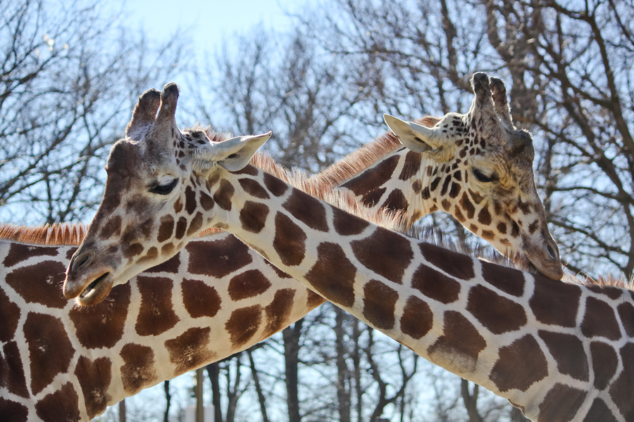 Feed giraffes on Albuquerque real estate.