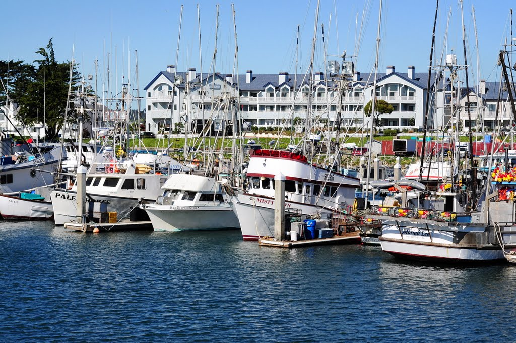 photo_of_harbor.jpg