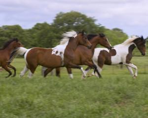 Colts Running