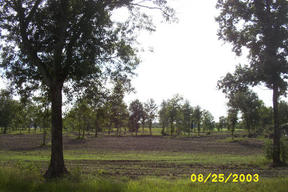 Lots And Land Sold: Lot 15 Poydras Bayou Rd