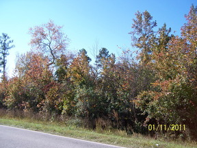 Lots And Land Active: 9501 Lee Rd 0279