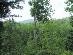 Lots And Land Sold: Lot 4 Stoney Brook Road