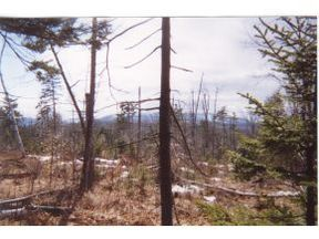 Sutton NH Lots And Land Active: $289,000