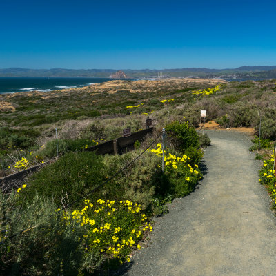 Homes for Sale in Los Osos, CA