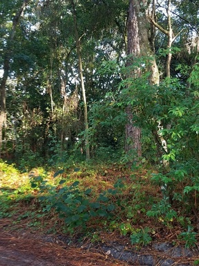 Mount Dora FL Lots And Land Sale Pending: $24,900
