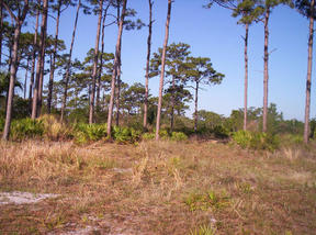 Lots And Land Sold: Steve Roberts Special