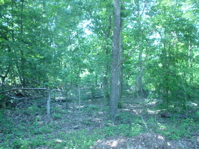 Lots And Land Sold: 0 Log Cabin Lane