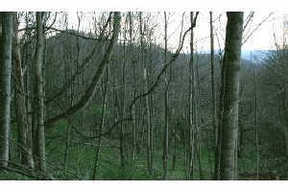 Lots And Land Sold: Roan Springs Rd