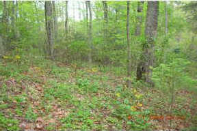 Lots And Land Sold: TBD Chinquapin