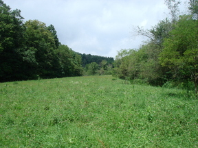 Lots And Land Sold: 2232 Millers Gap Hwy.
