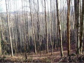 Lots And Land For Sale: TBD Buck Mountain Road