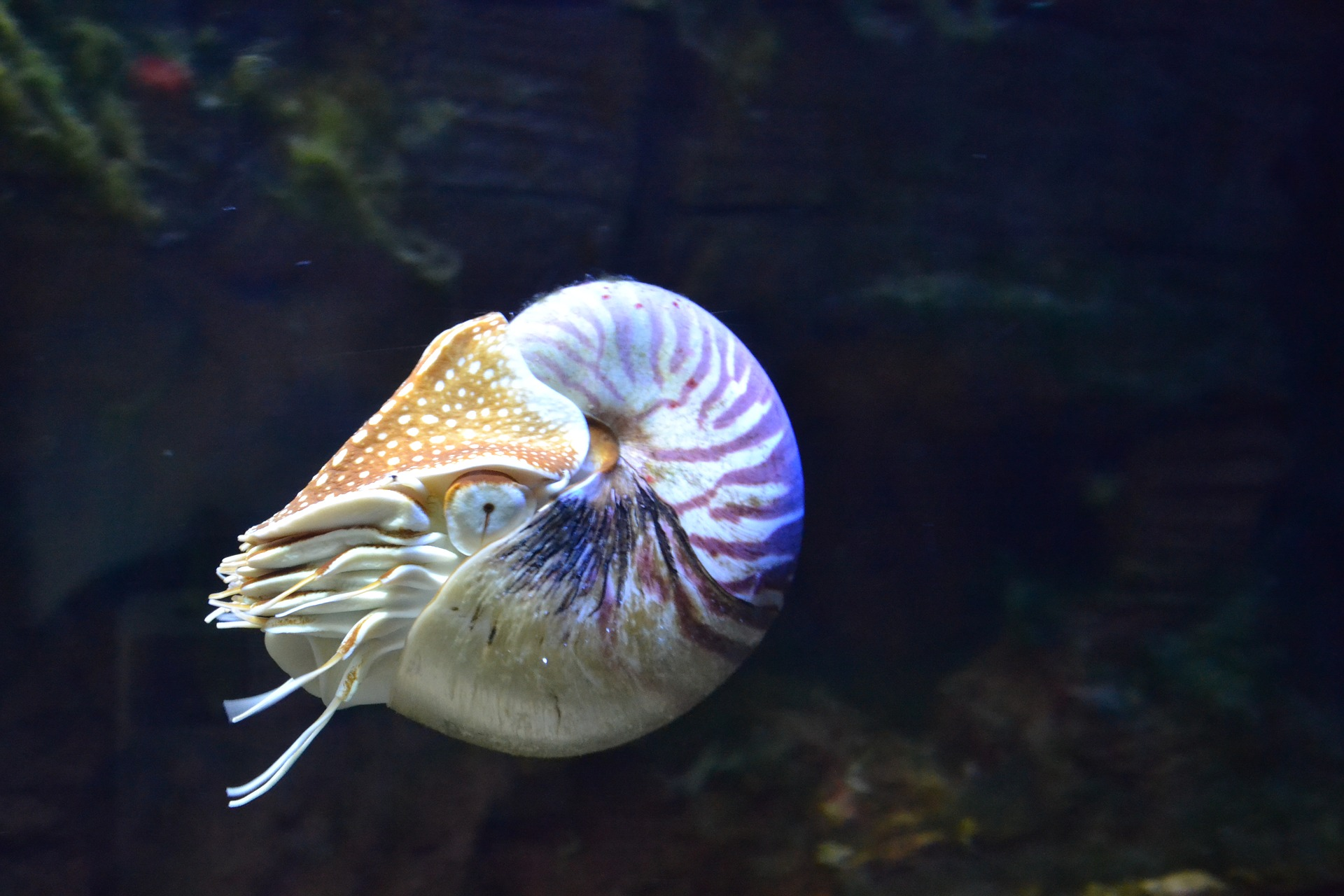 the shell of a live swimming nuatilus is used to demonstrate how the process of selling your central FL home is cyclical