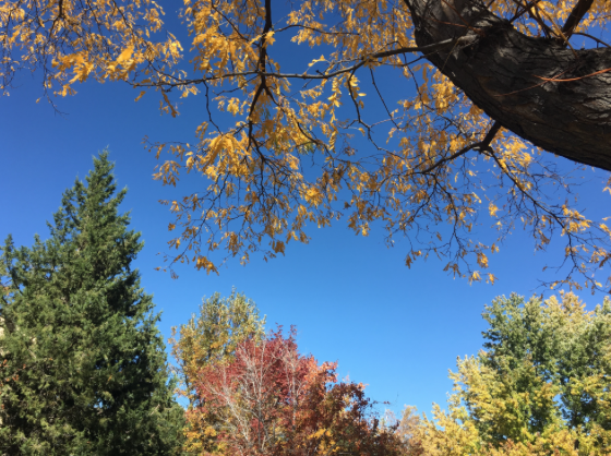 View looking up of trees changing colors in the fall