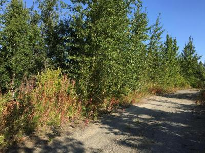 Residential Lots & Land For Sale: 63727 Oil Well Road