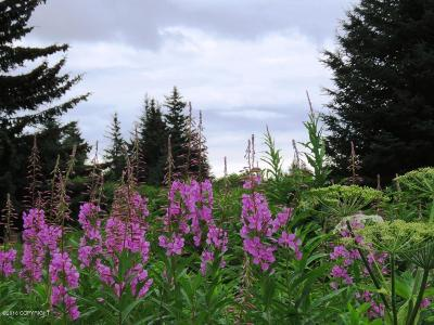 Homer AK Residential Lots & Land For Sale: $46,000