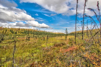 Wasilla Residential Lots & Land For Sale: NHN Andrea Drive