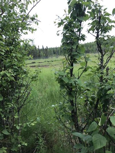 Wasilla Residential Lots & Land For Sale: 3585 Plover Circle