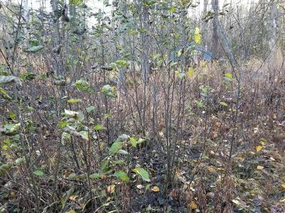 Anchorage, Chugiak, Eagle River Residential Lots & Land For Sale: 18631 Jasmine Road