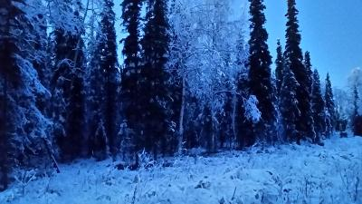 Soldotna Residential Lots & Land For Sale: 36735 Montclair Circle
