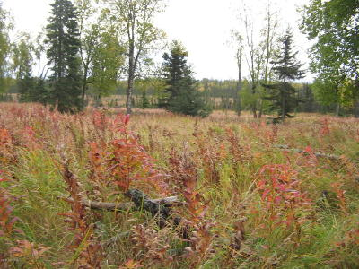 Residential Lots & Land For Sale: 13750 North Bar Swamp Trail REM SM