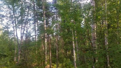 Big Lake, Palmer, Sutton, Wasilla, Willow Residential Lots & Land For Sale: 3361 Rainbow Street