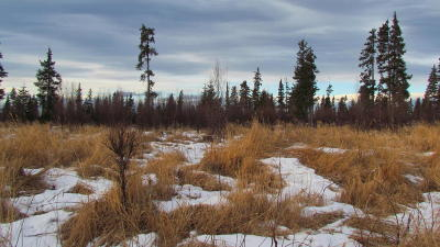 Anchor Point AK Residential Lots & Land For Sale: $20,000