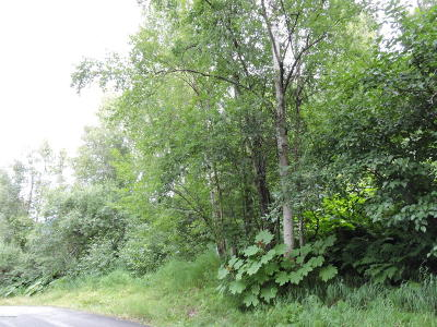 Chugiak Residential Lots & Land For Sale: NHN L2 Amonson Road