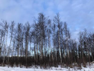 Wasilla Residential Lots & Land For Sale: 10161 Aspen Circle