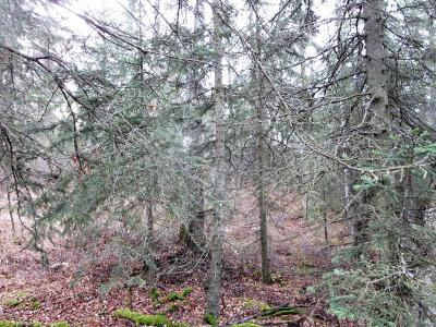 Anchorage Residential Lots & Land For Sale: L2A Birch Road