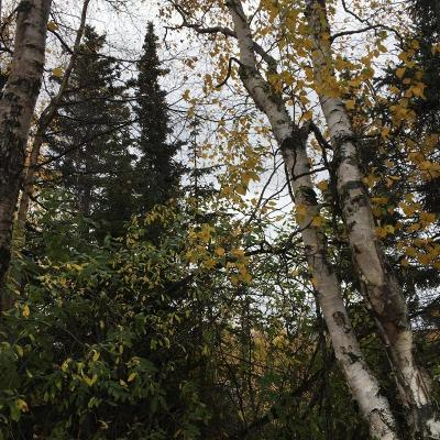 Talkeetna Residential Lots & Land For Sale: D002 No Road