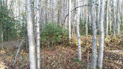 Wasilla Residential Lots & Land For Sale: 6691 Joe's Drive