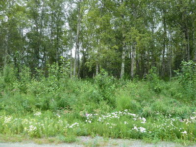 Wasilla Residential Lots & Land For Sale: 7270 Alyeska Drive