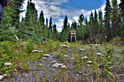 Soldotna Residential Lots & Land For Sale: Tr C-1 Brians Street