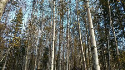 Wasilla Residential Lots & Land For Sale: 6691 Joes Drive