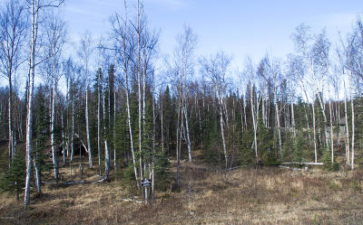 Wasilla Residential Lots & Land For Sale: 2784 Kalmbach Lake Drive