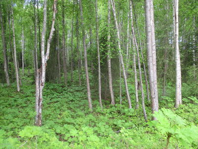 Big Lake Residential Lots & Land For Sale: Lot 7 New Sandee Circle
