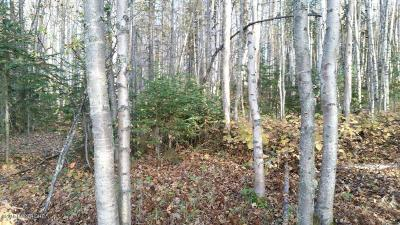 Wasilla Residential Lots & Land For Sale: 9690 Parks Highway