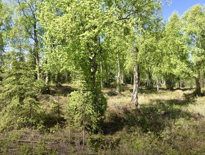 Kenai Residential Lots & Land For Sale: 38145 Woods Drive