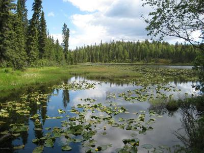 Soldotna Residential Lots & Land For Sale: 30600 Stubblefield Drive