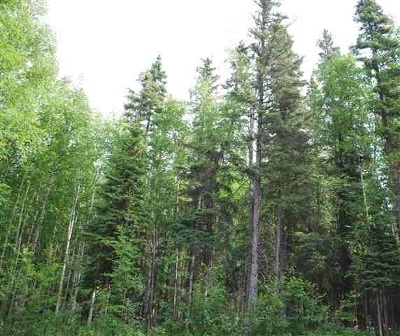 Fairbanks Residential Lots & Land For Sale: 1538 North Rader Drive