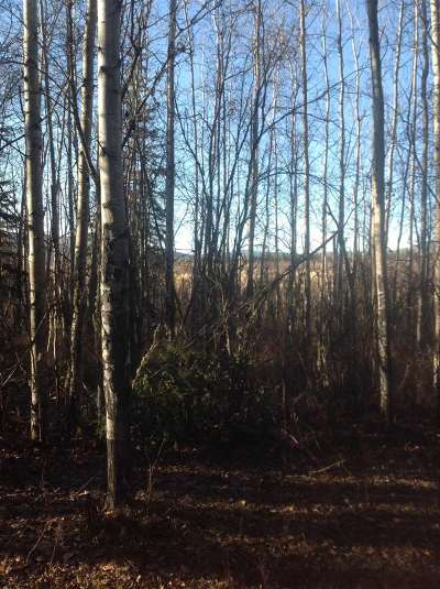 Fairbanks Residential Lots & Land For Sale: Nhn Dawn Drive