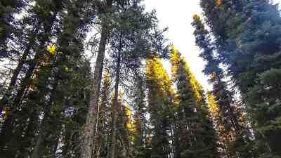 Fairbanks Residential Lots & Land For Sale: 2556 Livingston Loop