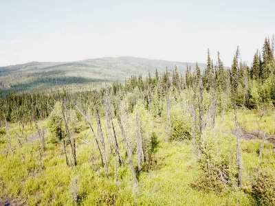 Fairbanks AK Residential Lots & Land For Sale: $23,650