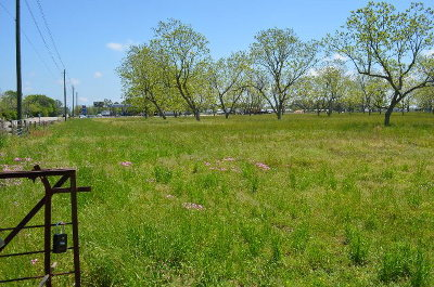 Lillian Residential Lots & Land For Sale: 33644 State Highway 98