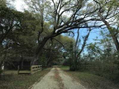 Magnolia Springs Residential Lots & Land For Sale: Pecan Grove Street