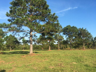 Lillian Residential Lots & Land For Sale: County Road 91